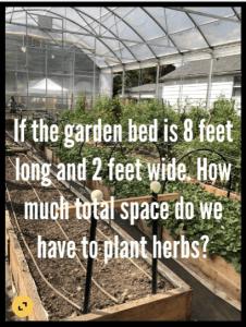 plants in indoor garden