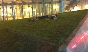 laying on grass at 2a.m.