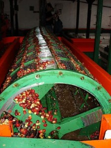 2 Processing Coffee Beans Commodity Chain