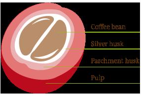 kaffeebohne_en