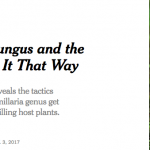 Humongous collaboration with Nagy et al. makes the New York Times