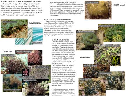 B2_Ocean_Algae_Guide_2011