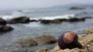 """A close-up of my lucky charm. My buckeye goes with me everywhere in Chile, and he gets to see all the beautiful sights that I see, too. This image captures how my study abroad experience is more than just studying: I am expanding my horizons as a proud buckeye, and I am lucky to represent my university everywhere I go."" This photo I took in Horcón, Chile won the Buckeye Pride Worldwide Category in the 2015 International Photography Exhibition at Ohio Sate."
