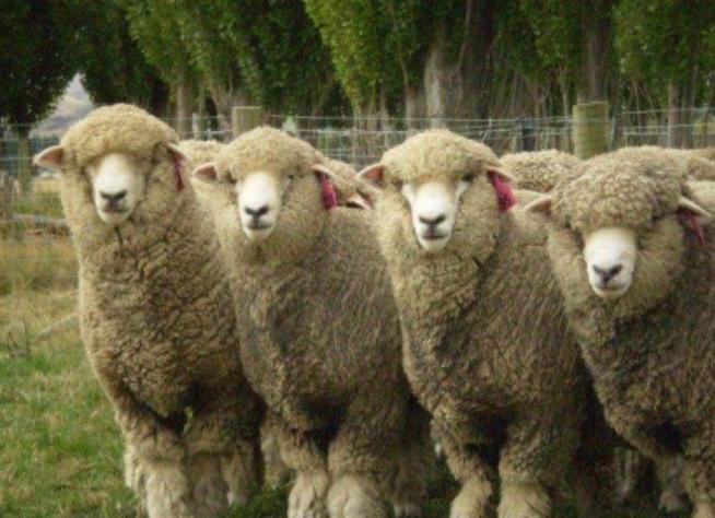Events | OSU Sheep Team