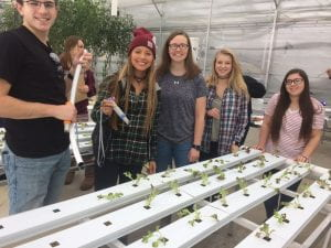 Students working with hydroponic plants.
