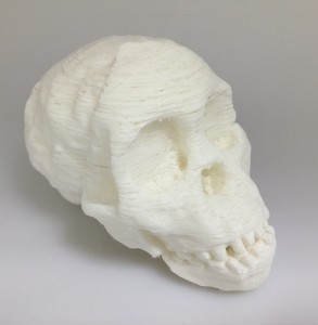 Model of Taung Child Skull printed using white PLA filament.