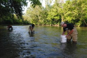 Volunteers collecting samples from creek