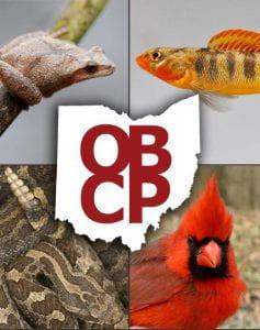 OBCP graphic