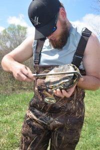 Measuring Blanding's Turtle plastron length