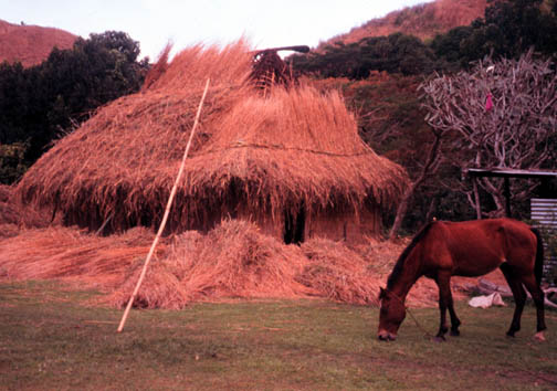 Traditional bure in Sigatoka Valley, getting its thatch