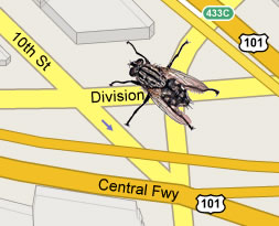 image of a housefly superimposed on a street map of San Francisco