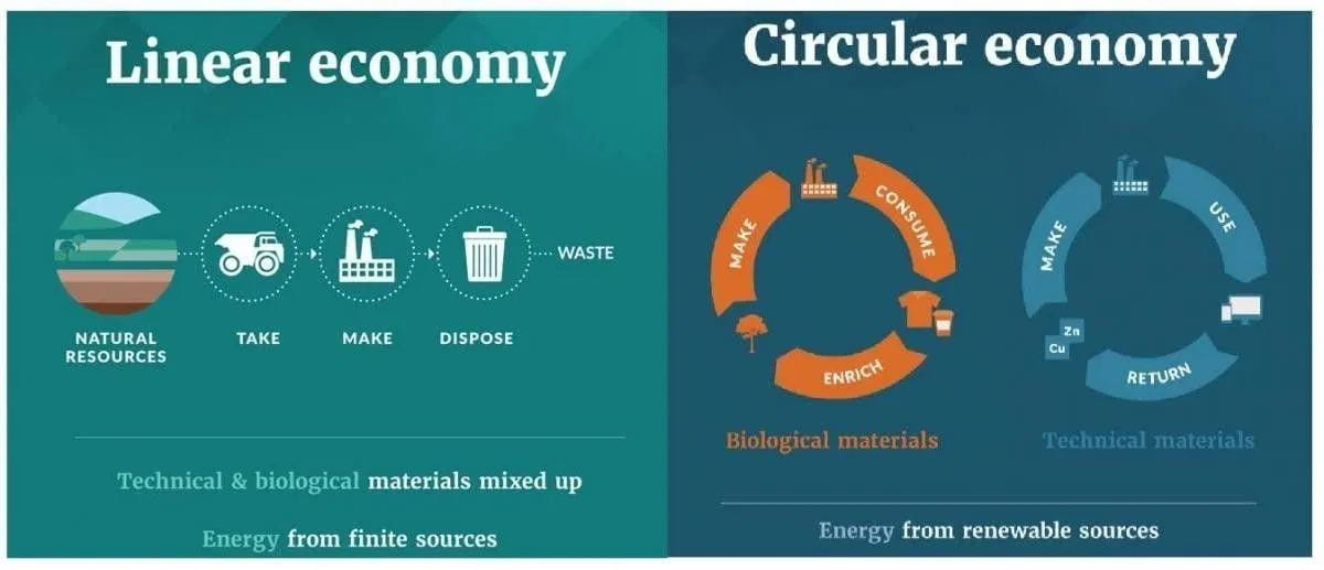 Compares the differences between a Linear Economy and a Circular Economy. A Linear Economy has natural resources being taken, used, and disposed of; materials are unsorted and energy is finite. A Circular Economy recycles or reuses materials post-consumption; energy is from renewable sources.