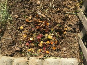 Food waste on top of a dirt pile.