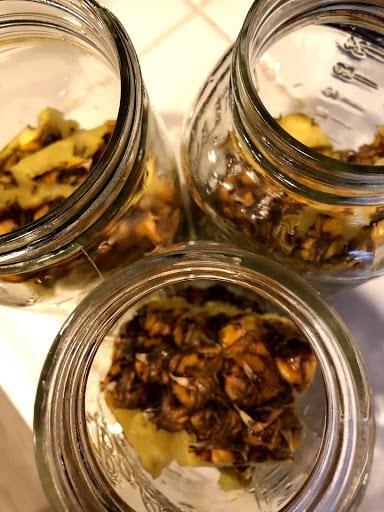 Pineapple rind and sugar inside of three jars.