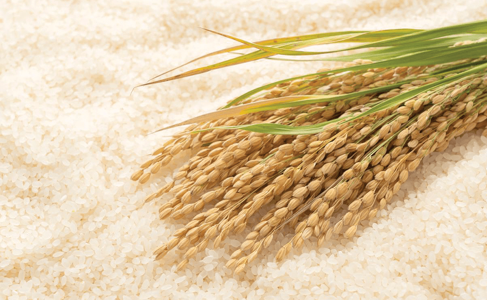 Image of rice and wheat