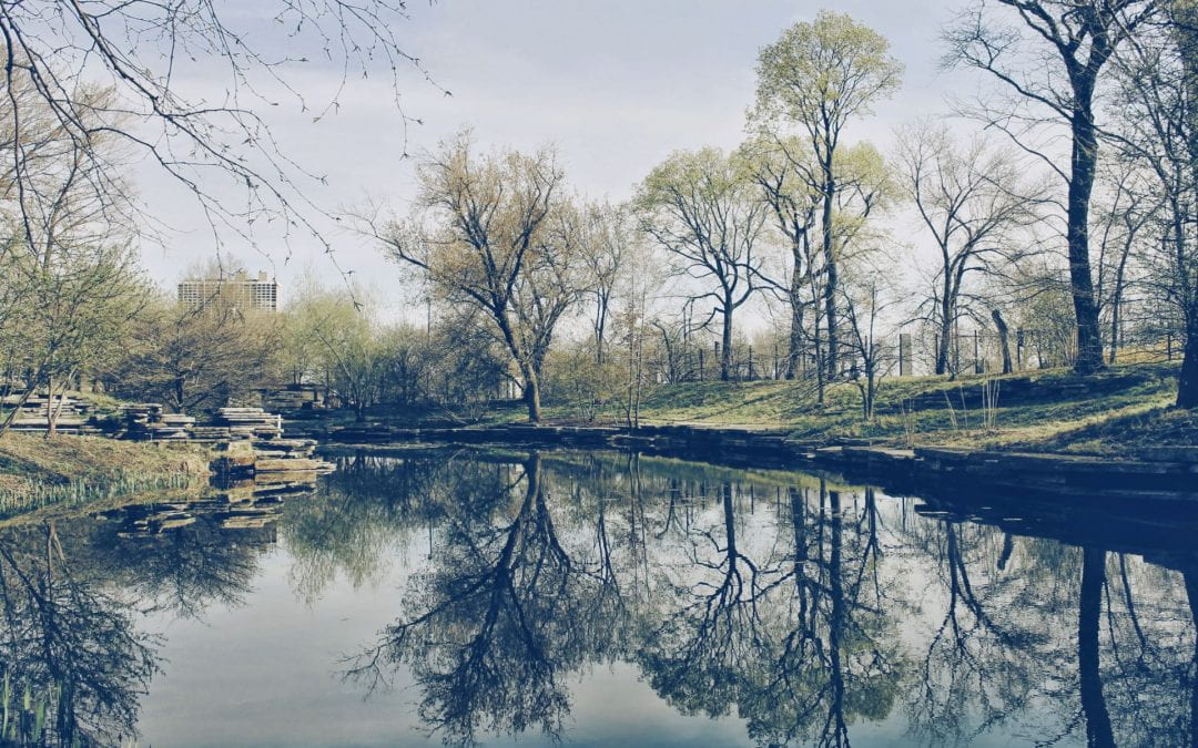 Spring Update from the Mansueto Institute during COVID-19