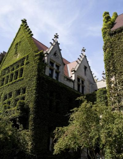 Ivy covered neo-gothic buildings on the quad