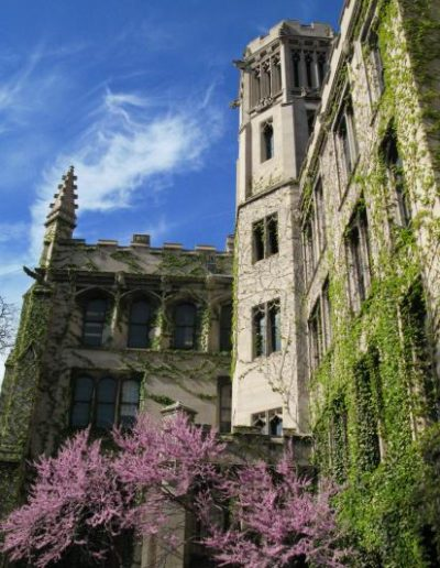 A neo-gothic building on the quad with ivy and spring flowers