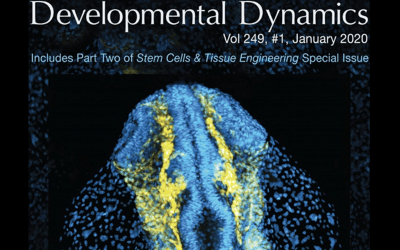 Prince lab paper makes cover of Developmental Dynamics!