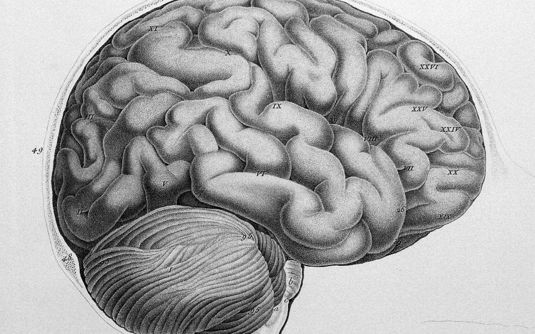 Old medical drawing of the brain