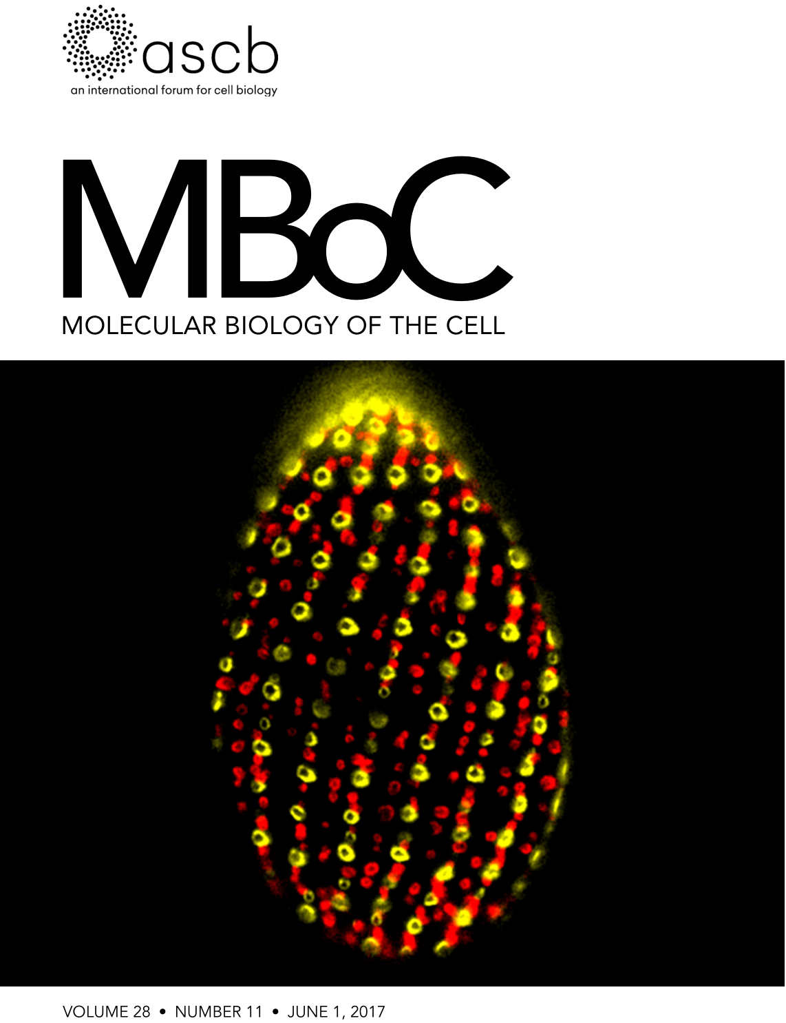 Featured in Molecular Biology of the Cell