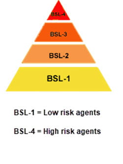This image displays 4 biosafety levels (BSL) ranked lowest risk (yellow) to highest risk (red) in a pyramid shape.