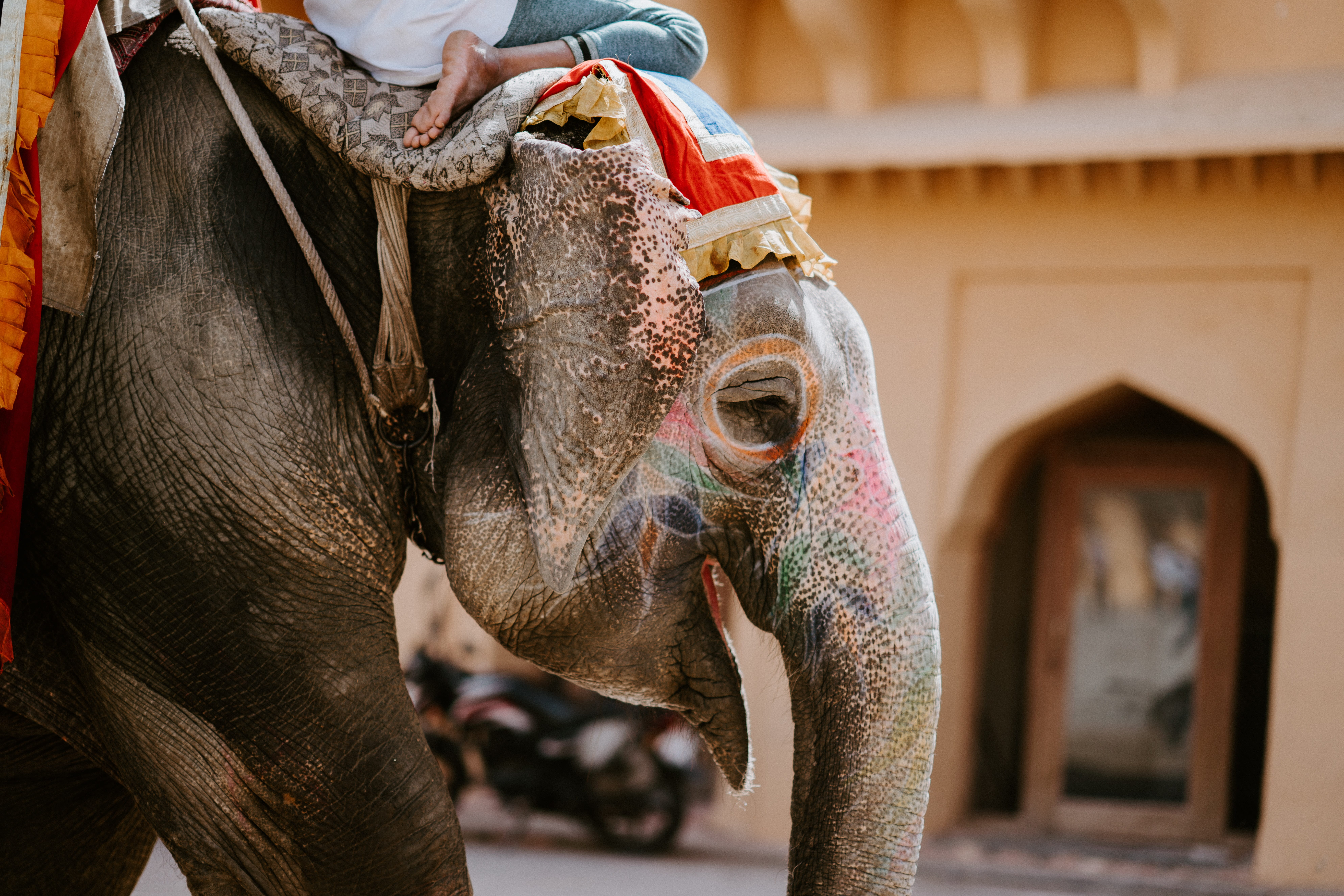 Man riding a painted elephant