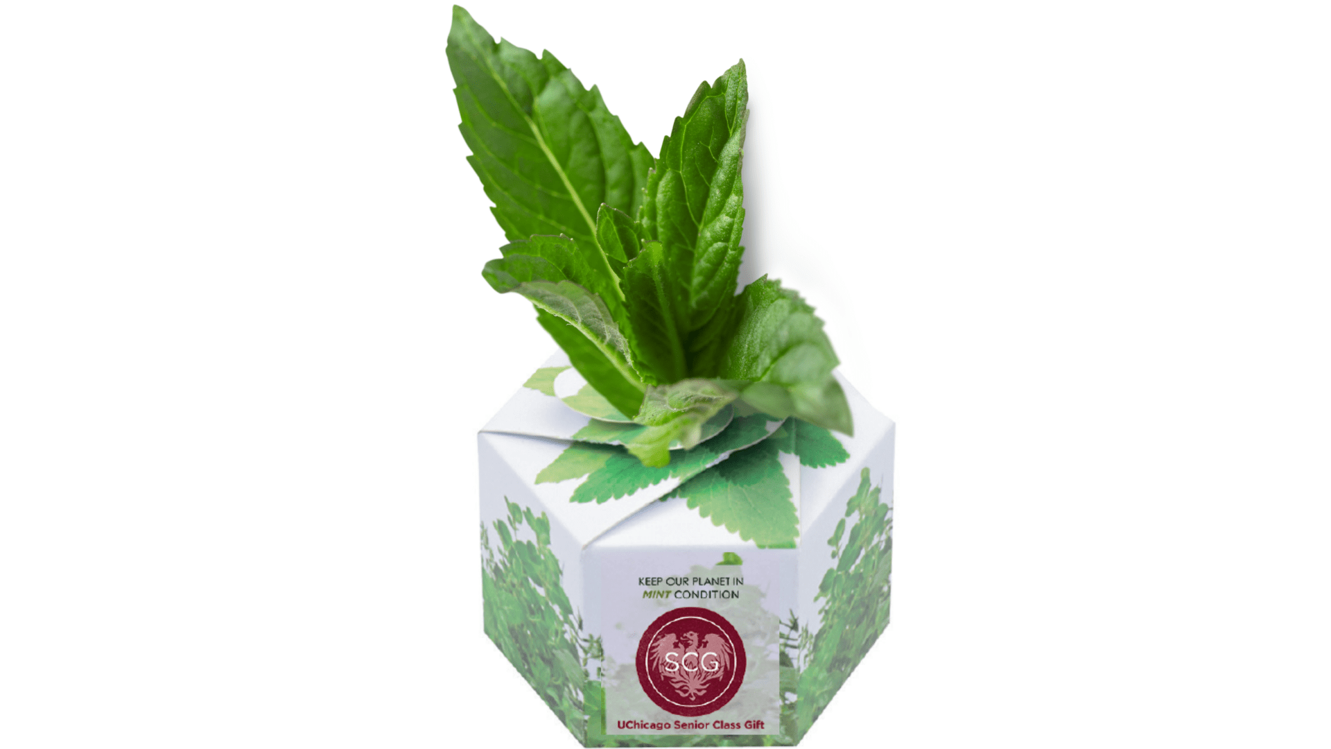 uchicago planter with mint