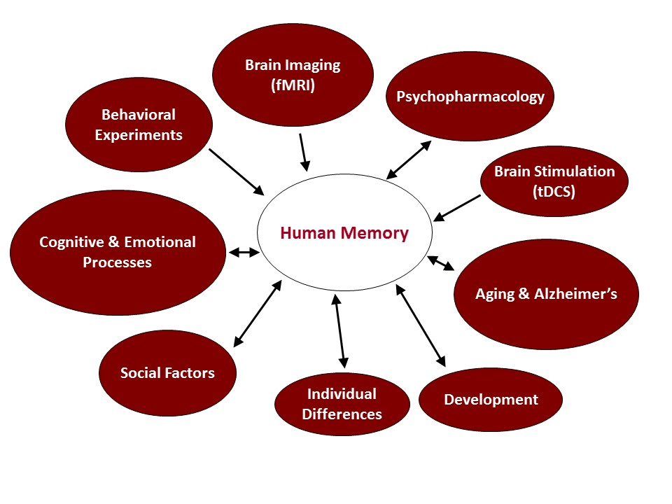 an overview of the mechanism in human memory in adults Summary of piracetam primary information, benefits, effects in regards to the mechanisms of piracetam increase in the power of human memory in normal man through the use of drugs psychopharmacology (berl) (1976.