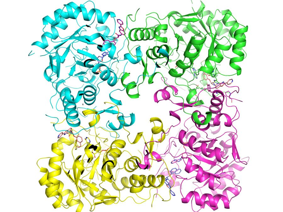 Battling infectious diseases with 3-D protein structures
