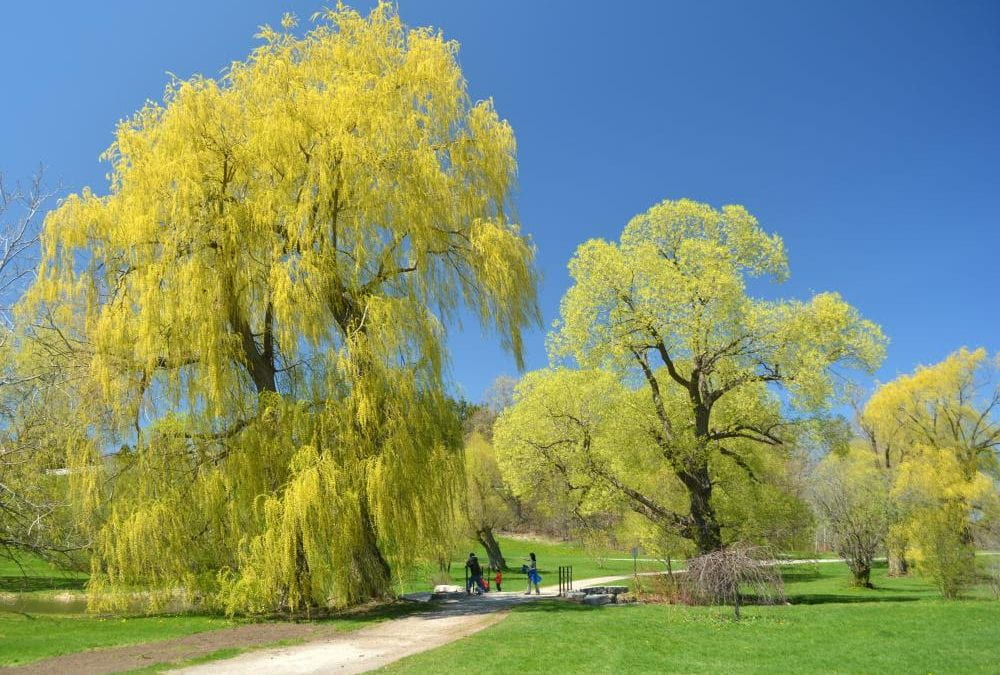 Healthy Trees – Healthy City: A Celebration of National Tree Day