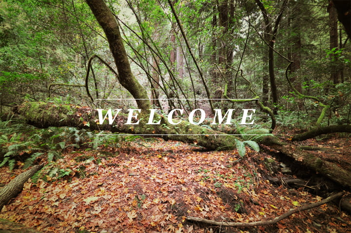 The ENL welcomes new lab members