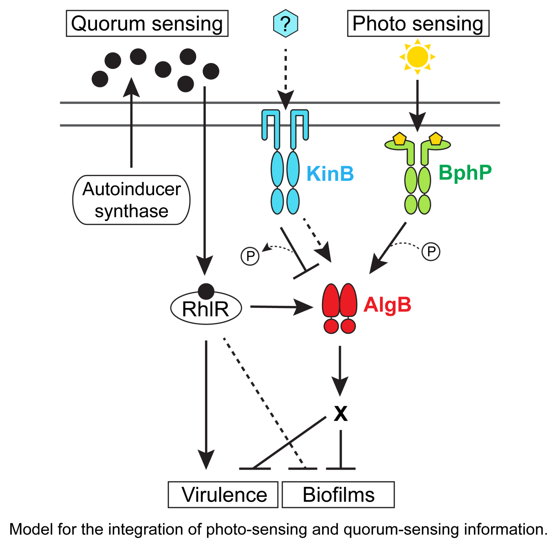 Integration of multiple sensory cues