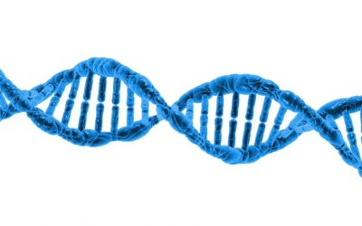Genetic Variants Demonstrating Flip-Flop Phenomenon and Breast Cancer Risk Prediction Among Women of African Ancestry