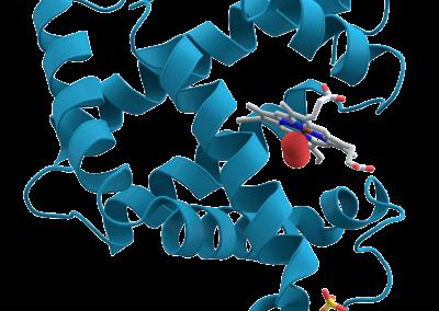 Myoglobin-102sz04