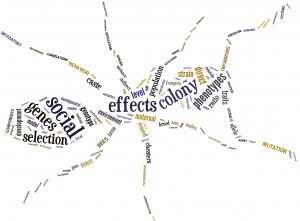 Word cloud illustrating common words used in publications