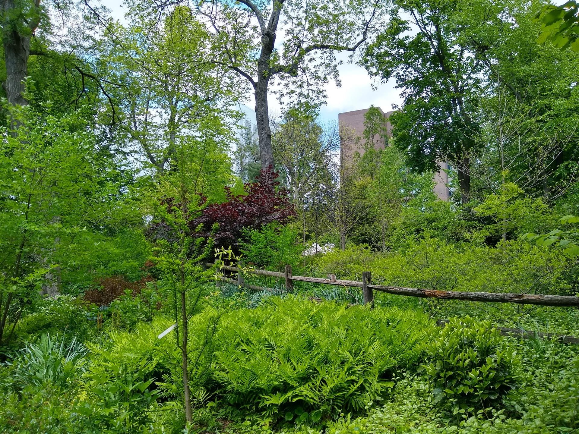Vibrant fresh foliage of the park.