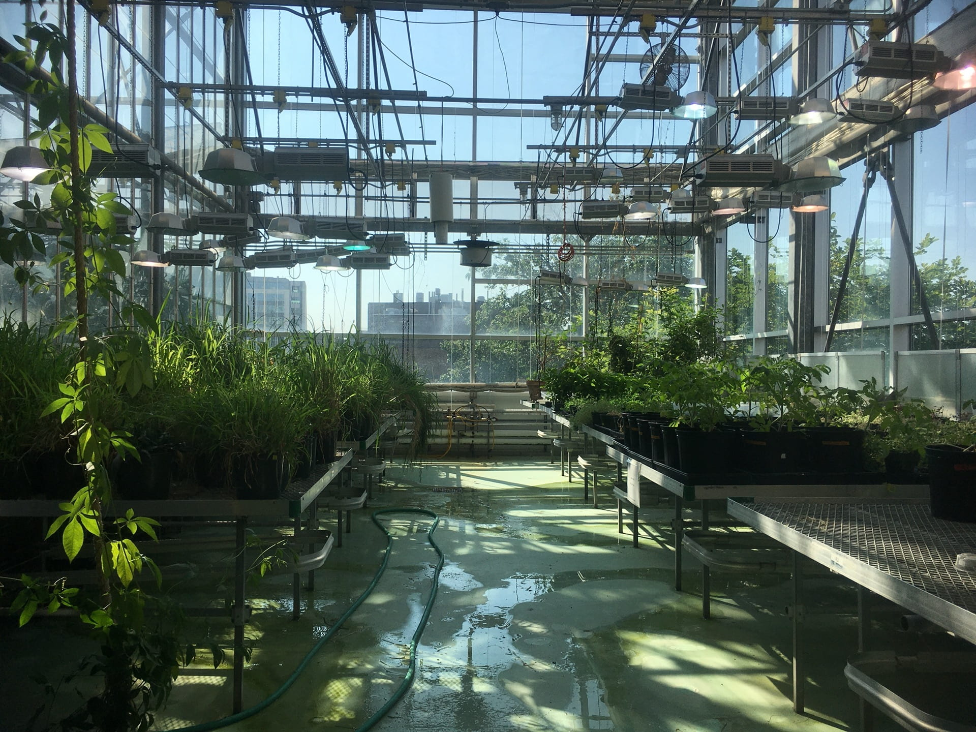 The longview of the Research Greenhouse.