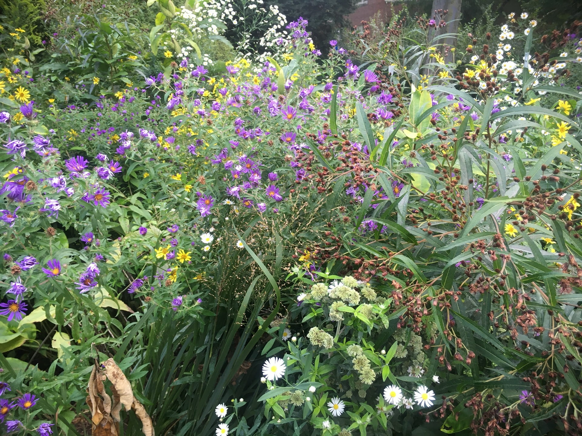 A complex mix of plants from the Aster family reaches its peak in mid autumn.