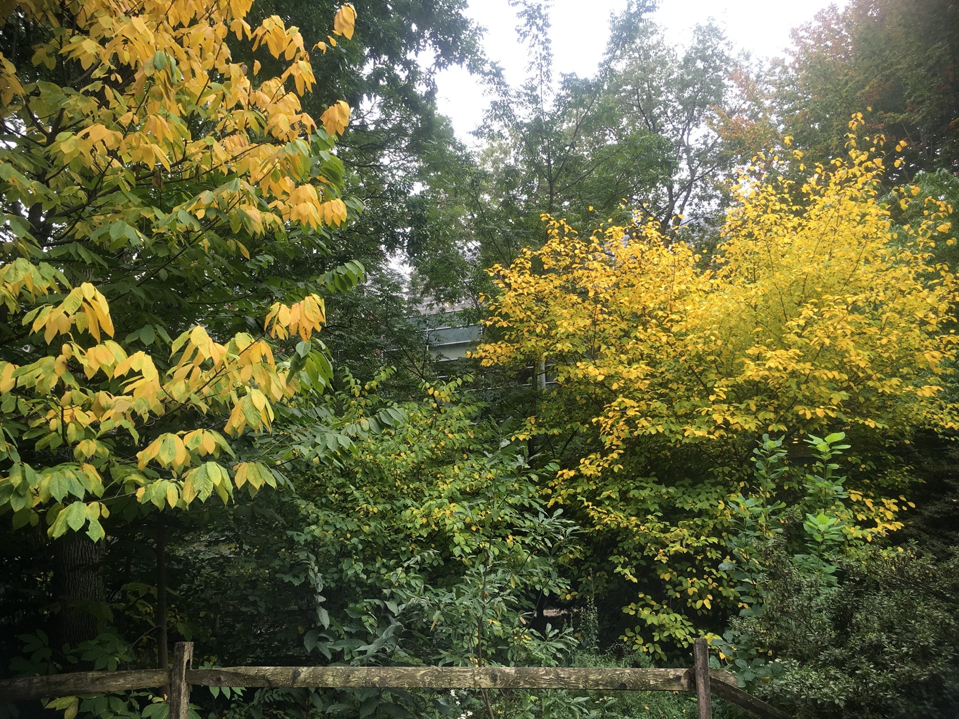 Vibrant yellow foliage along the top of the pond.