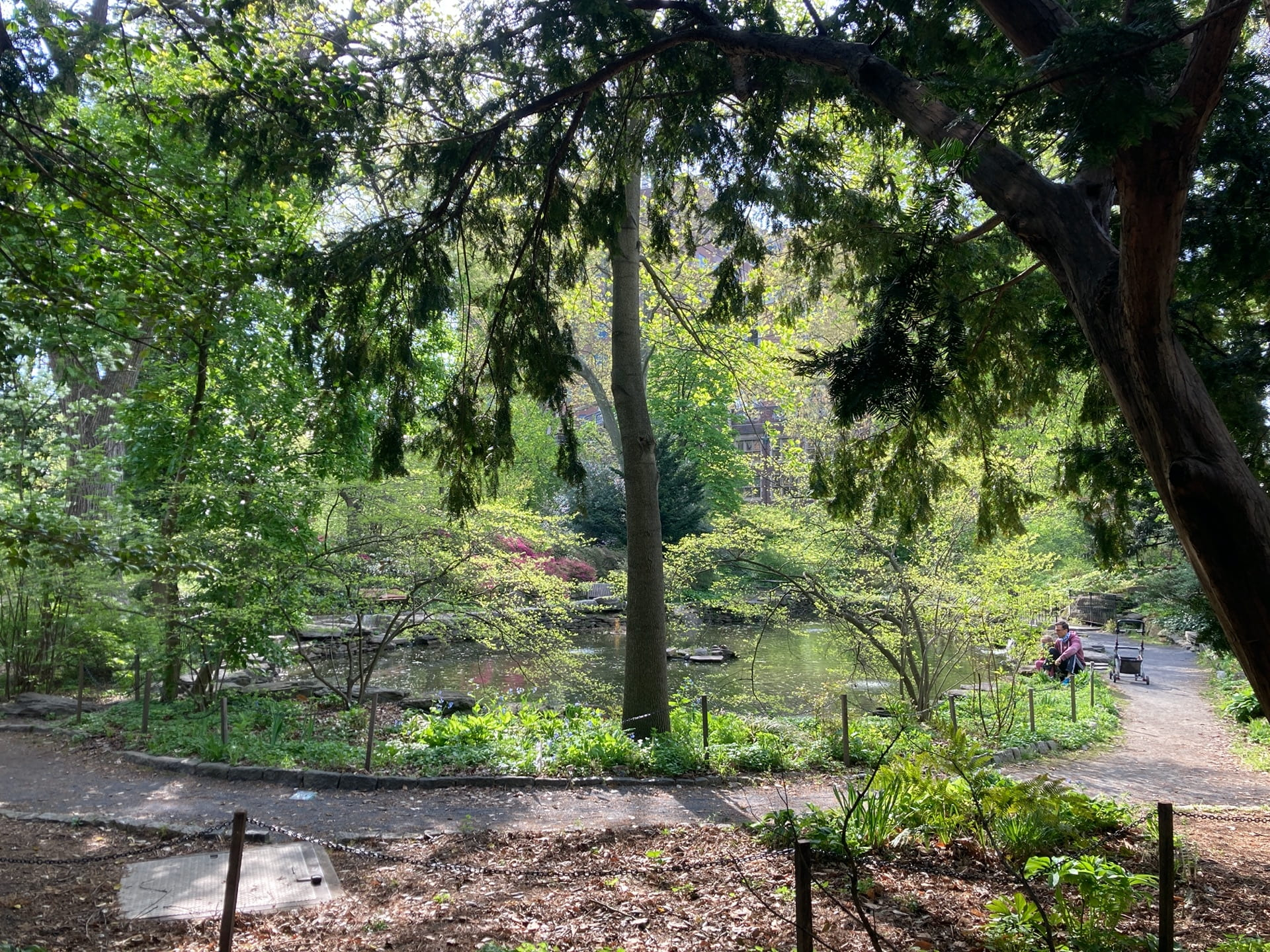 A view of the BioPond from under the shade of Taxus baccata.