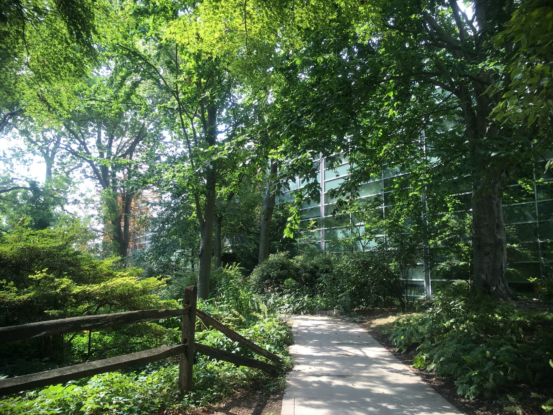 Mature trees provide welcome dappled shade along the Stone Path.