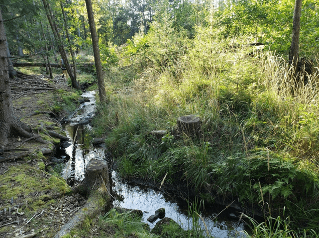 Connecting to the Forest at World Water Week in Stockholm, Sweden