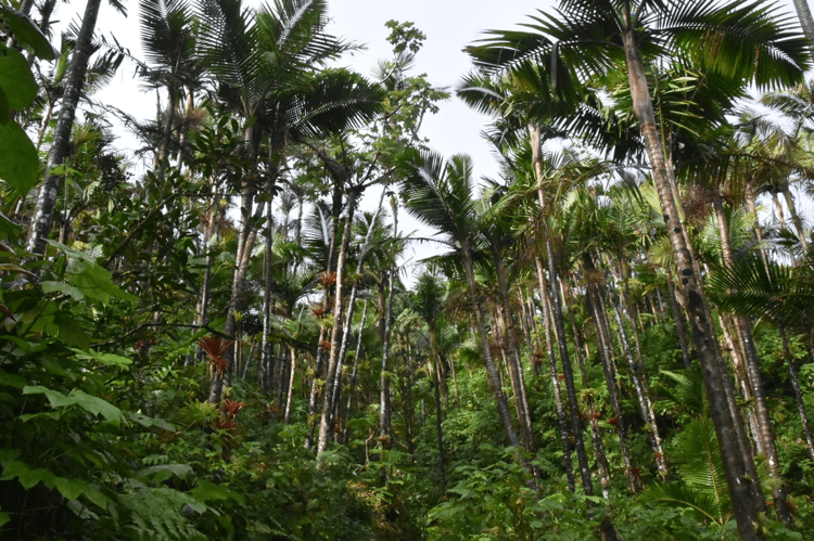 Exploring Puerto Rico's Diverse Ecosystems in the Wake of Hurricanes Irma and Maria