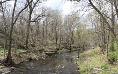 Stakeholder Engagement in the Cobbs Creek Watershed:  Lessons Learned and a Path Forward