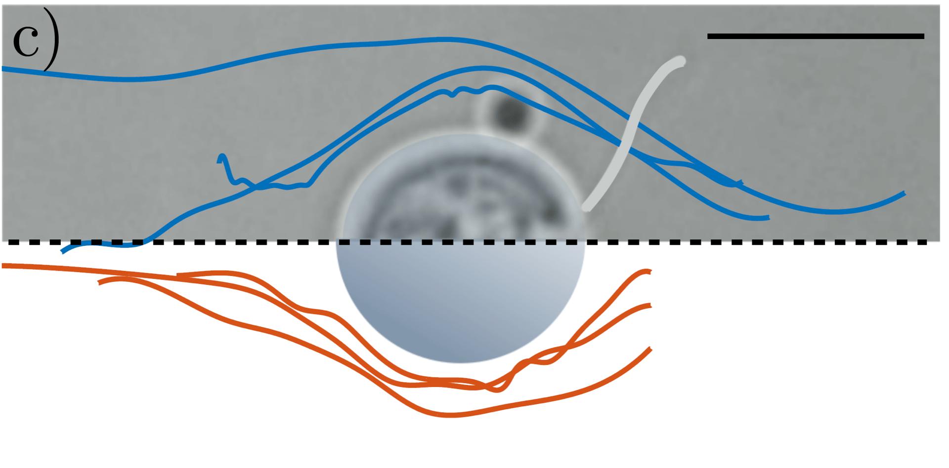 Juegos Y Accesorios Runsmooth Detector De Mentiras De Micro Descargas Electricas Juego De Mesa De Fiesta De Verdad Para Consolas De Analizador De Fiestas Juguete De Dedo Prueba De Poligrafo Interesante Regalos