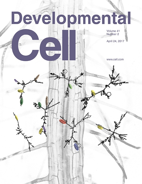 See our publication on Developmental Cell that got a cover story!