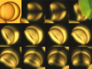 Liquid Crystal Janus Drops figure
