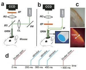 cortical activation experiment figure