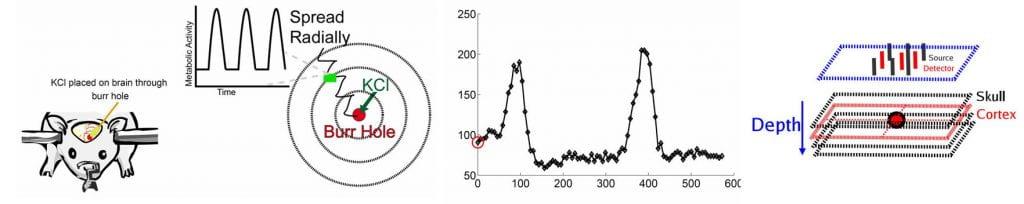 blood flow changes in rat brain figure